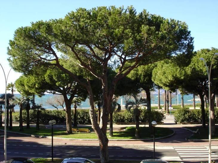 Vente Appartement Cannes (06) 84m² 1.000.000€