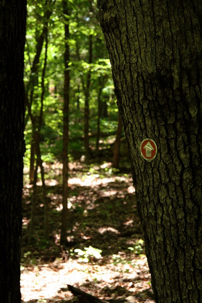 White Oaks Trail at Hawn State Park