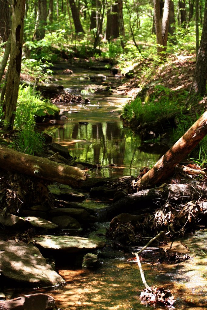 Tributary to Pickle Creek at Hawn State Park