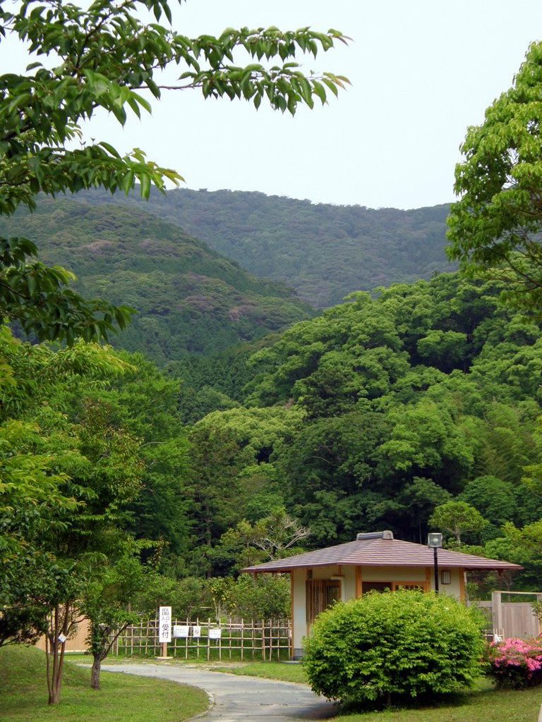 View of Forested Hills