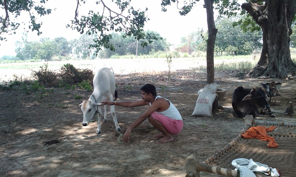 village life at Naupur Thanagaddi Jaunpur
