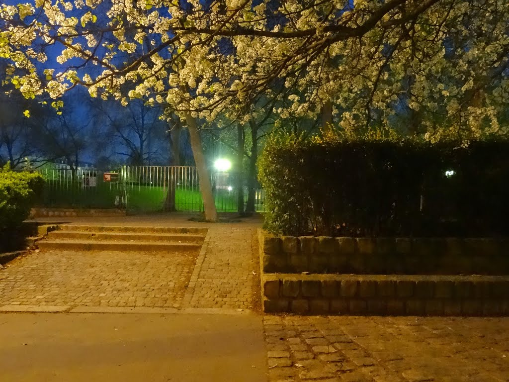 all is in blossom at Parc Georges Brassens
