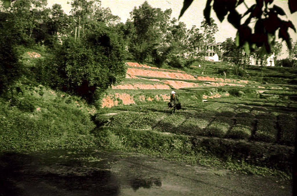 Intesively cultivated fields in the outskirts of Guangzhou, China