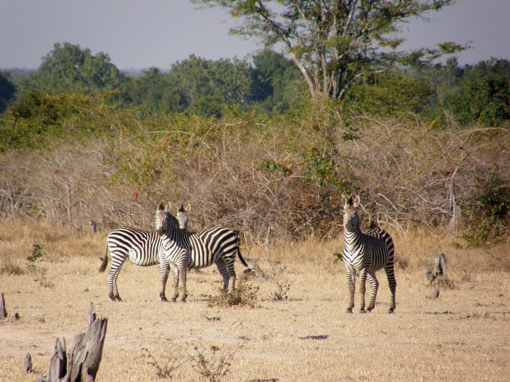 Cebras en North Luangwa
