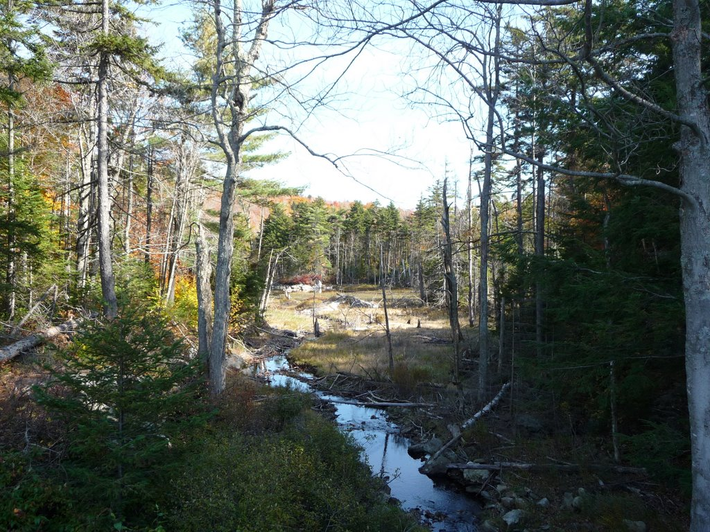 Stream In back of Morgan Pond