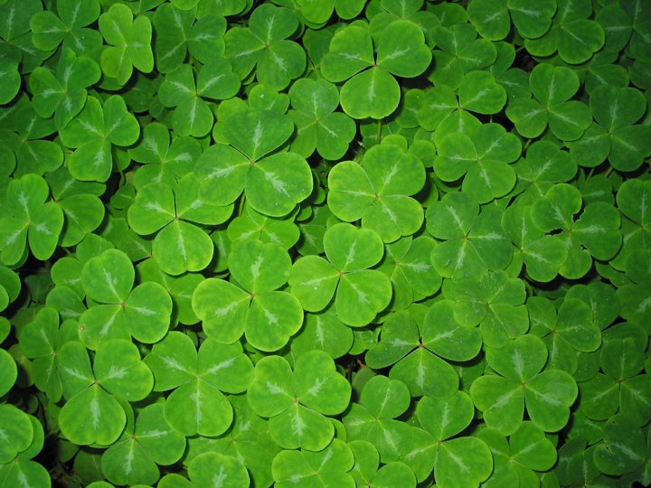 looking for luck