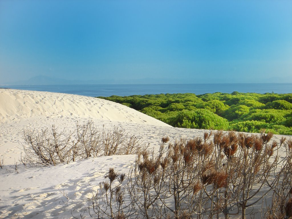view from top of the dune