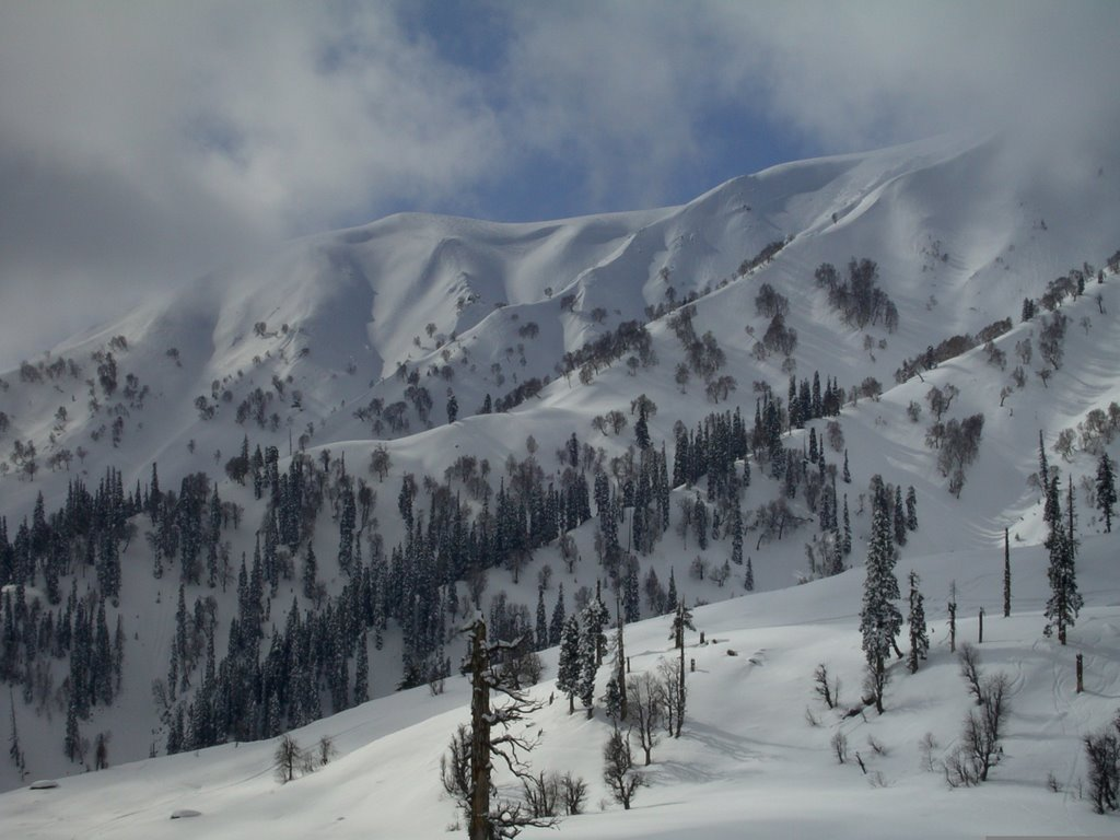 Snow & trees in the Gulmarg
