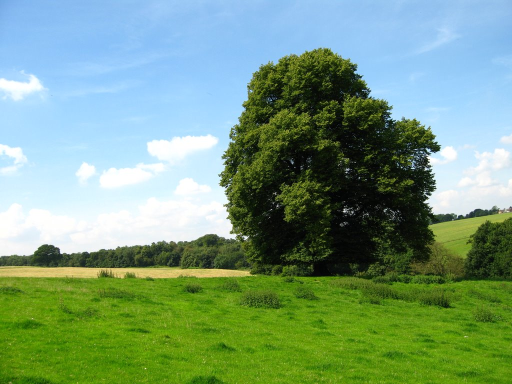 Looking back to Bretby with Watery Lane following the line of trees