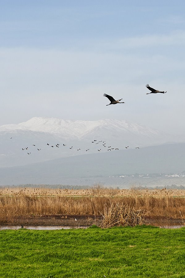 Mt Hermon, view from the Lake Agmon, Hula Valley