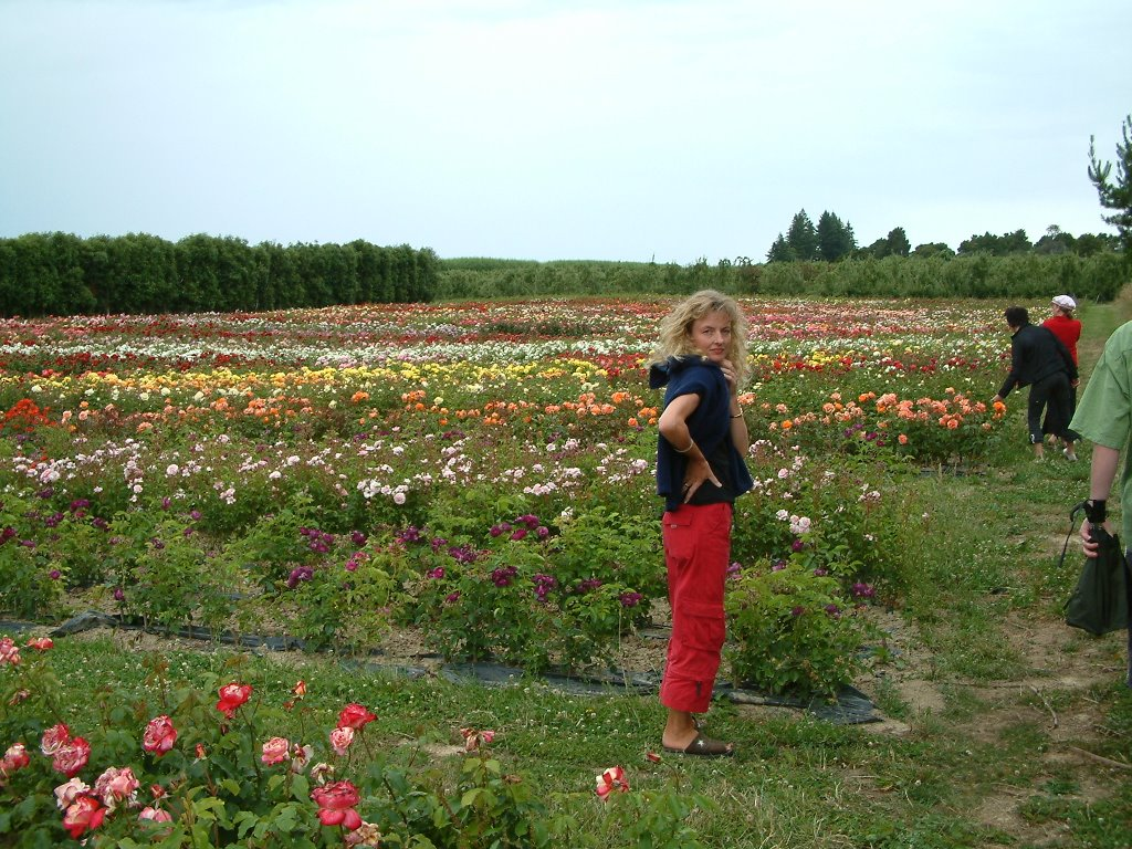 Rose Nursery At Tasman Bay Roses