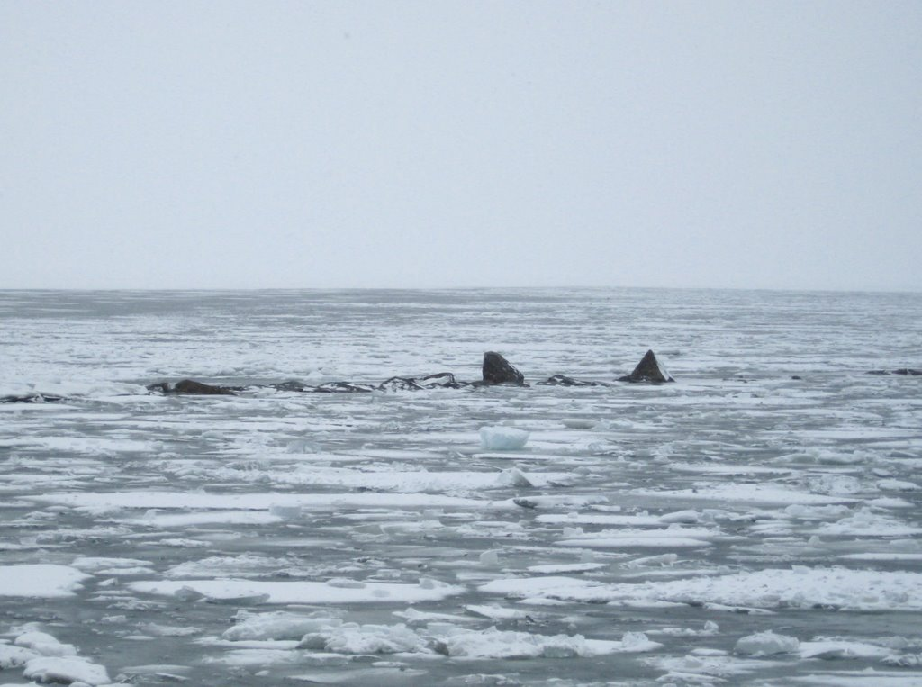 Champy?  (Nope, just some rocks and ice on lake Champlain)
