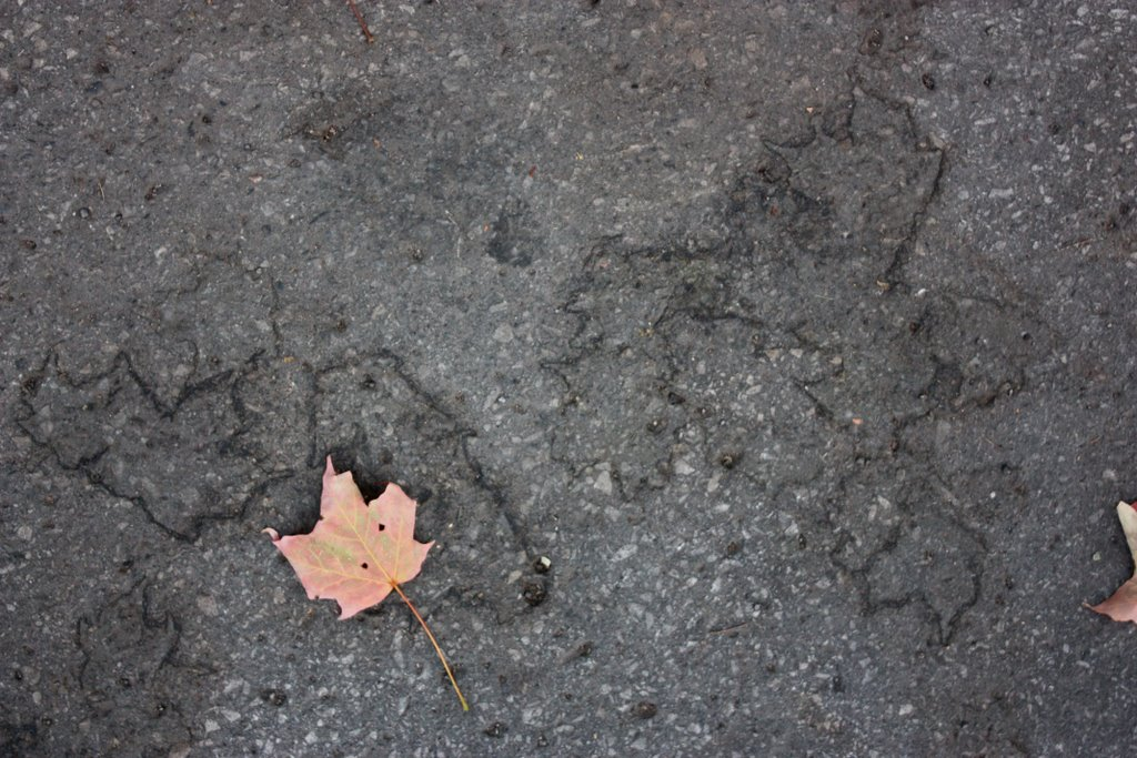 Maple asphalt on the uOttawa