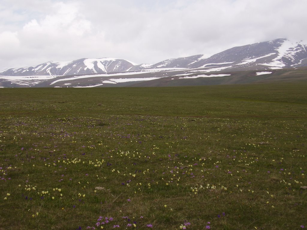 Spring on Asy plateau