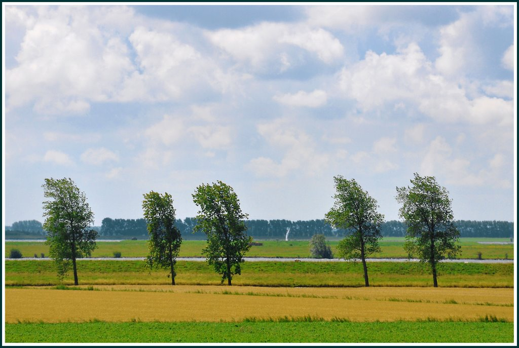 Some trees in the wind, Zuid-Beijerland