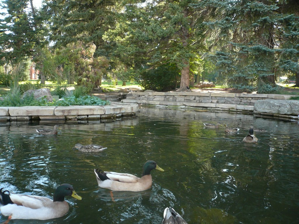new and improved Duck Pond