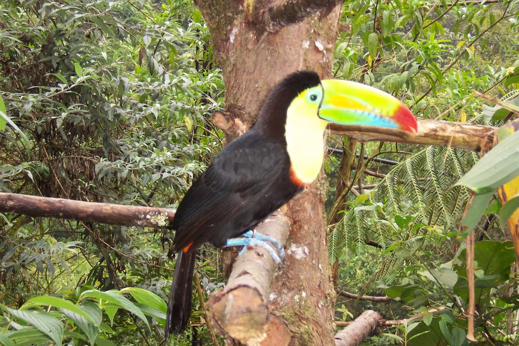 If a toucan can, then you can too.