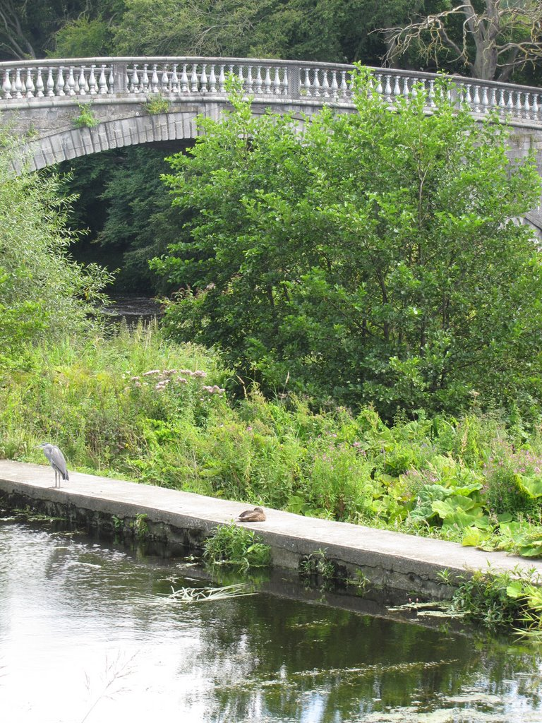 heron and bridge