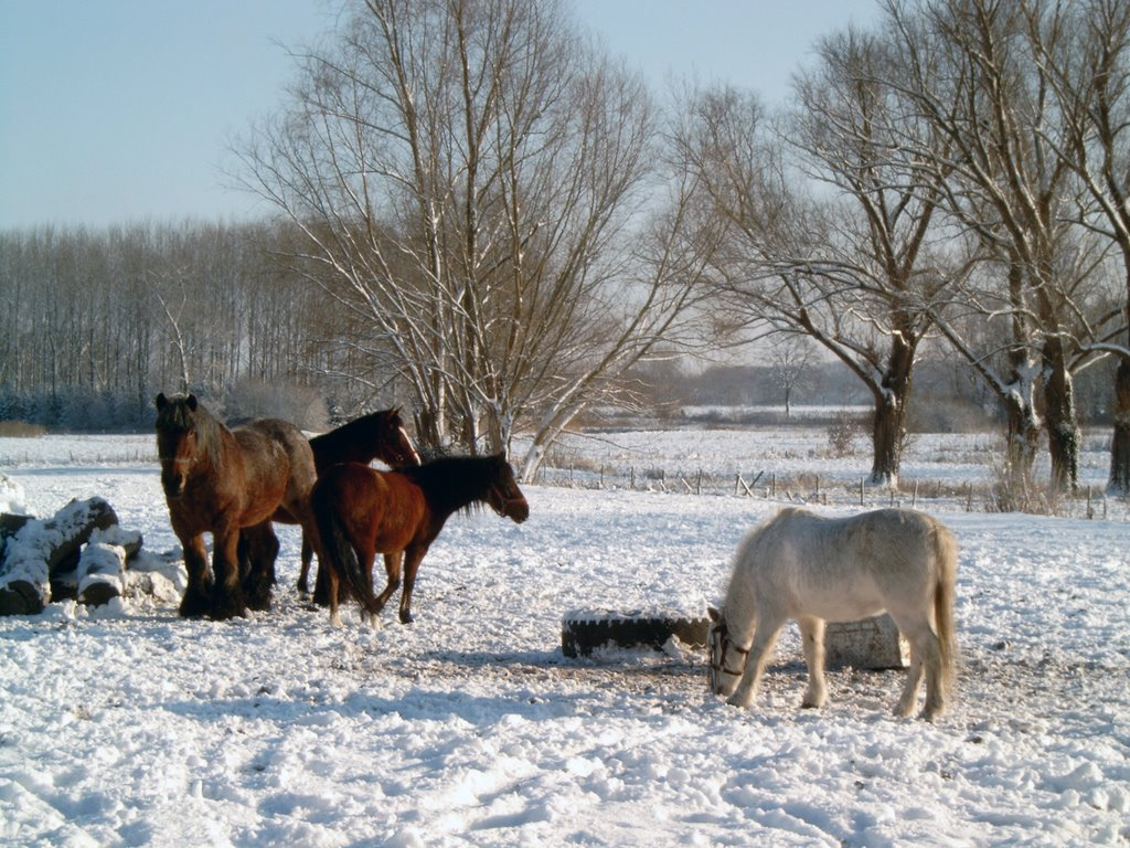 Winter landscape with Horse's