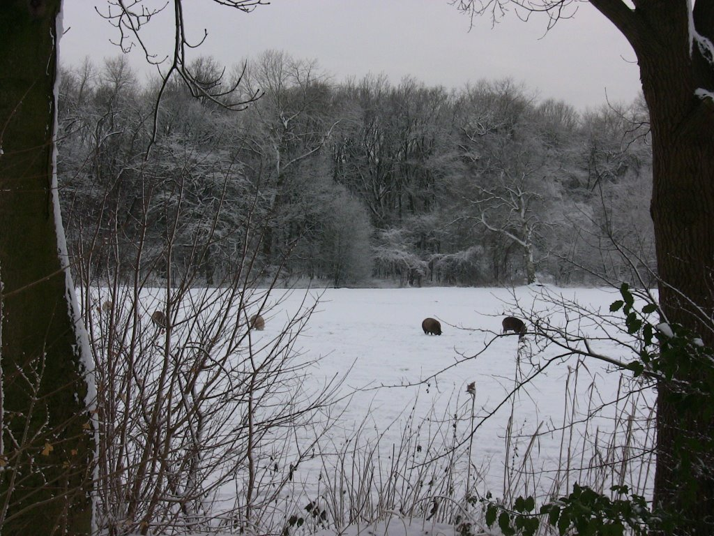 Winter landscape with sheep's