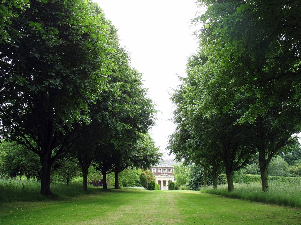 Avenue from Limetrees in the Arboretum from Goodnestone Park