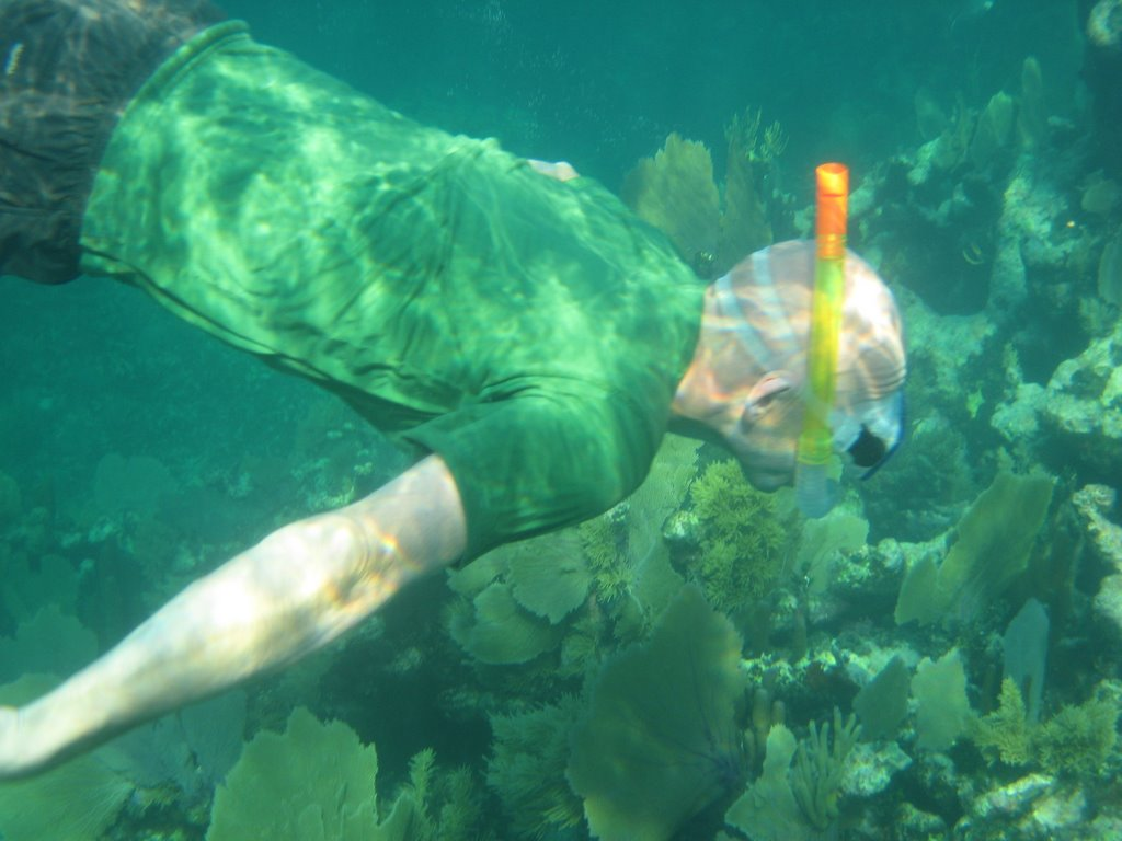 snorkeling at the barrier reef