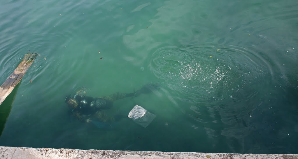 Diving in the rubbish sea