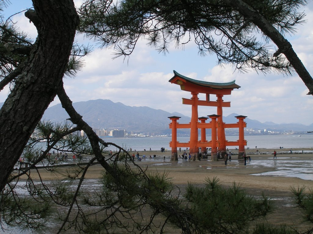 Floating Torii during low tide