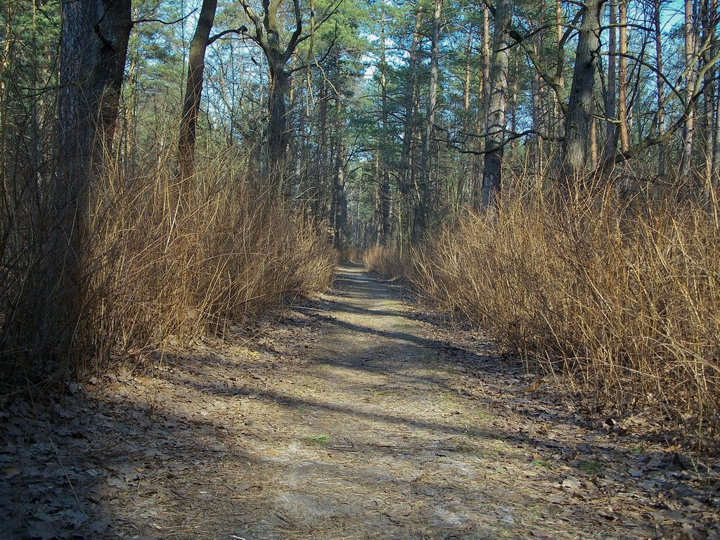 Forest road in Pusha Vodica