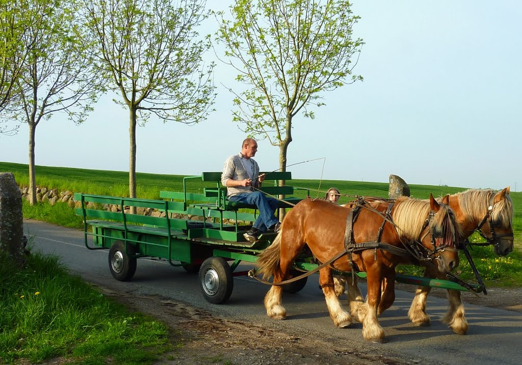 Horsecart on a small road