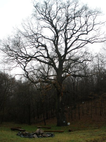 Very Old Oak - historical point