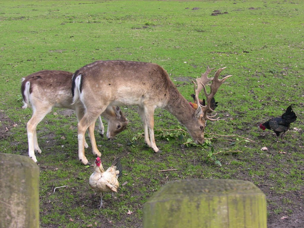 Deers and chickens