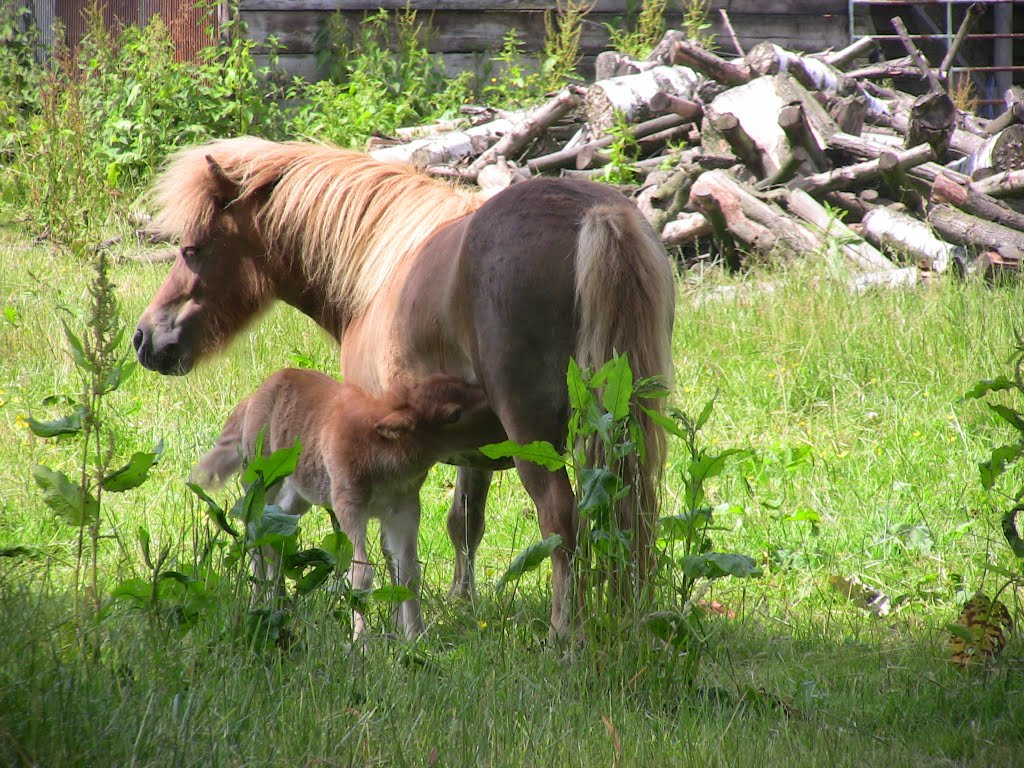Mother with little pony 2 days old
