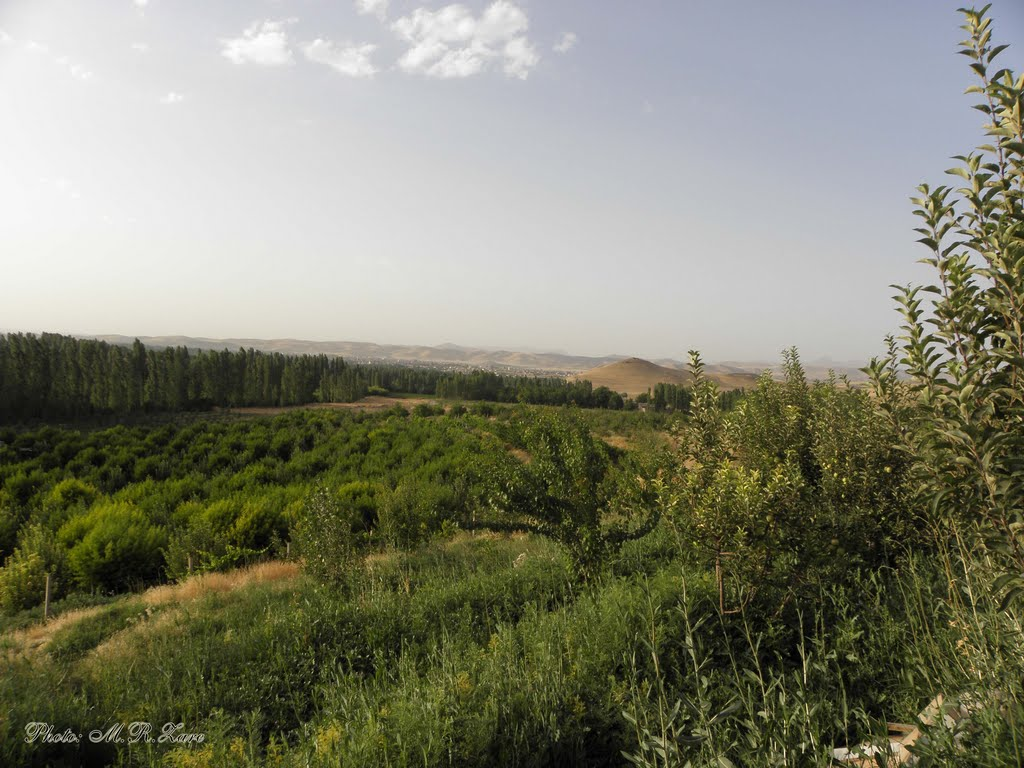 landscape of orchards around the shahindezh city باغات اطراف شاهین دژ (by Mohamad Reza Zare)