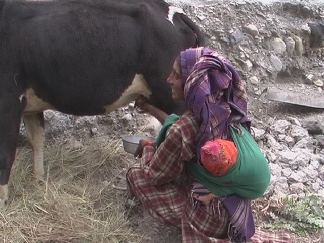 Cow,women and child on back.
