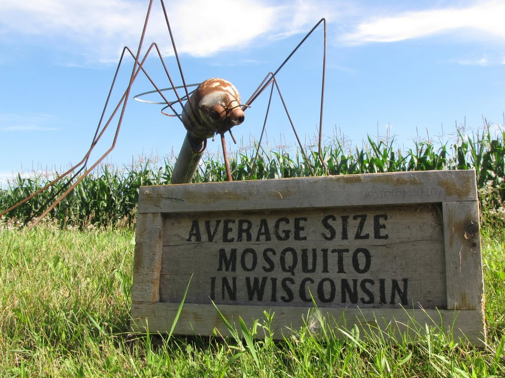Average Size Mosquito In Wisconsin