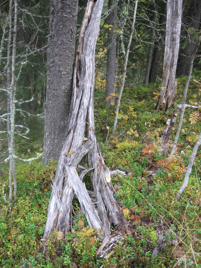 Nature forest. dead tree
