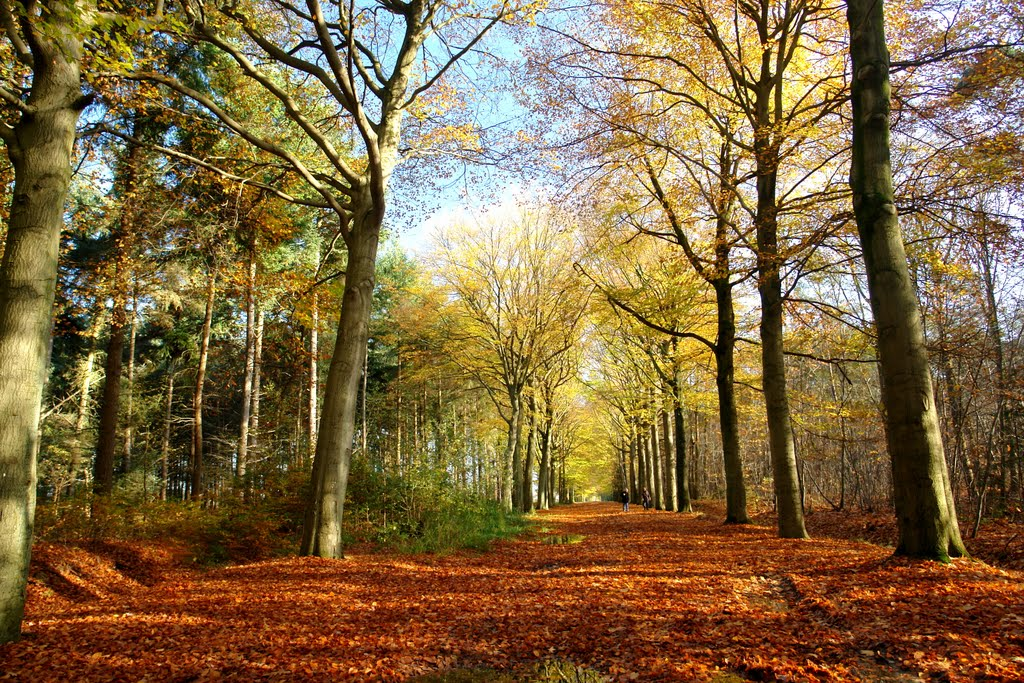 forest in Holland....