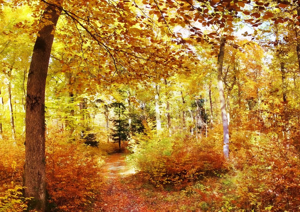 forest path in the Vaud