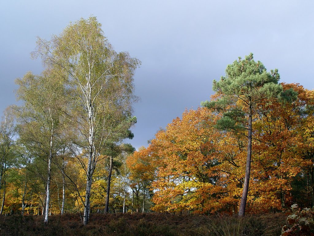 colours of the forest