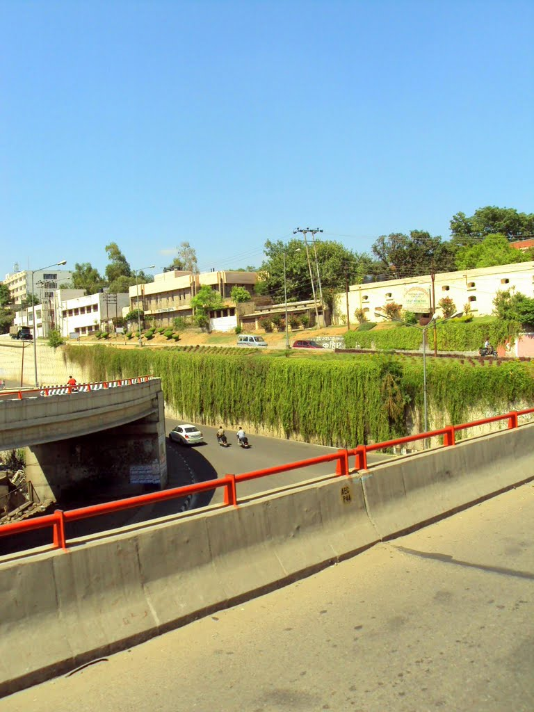 Plants grown all over the flyover