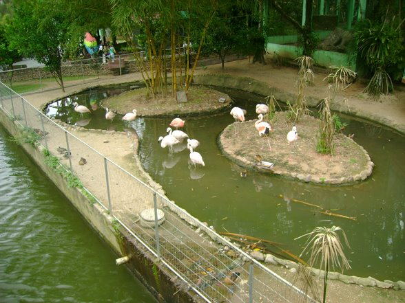 Zoo Pomerode - Flamingos