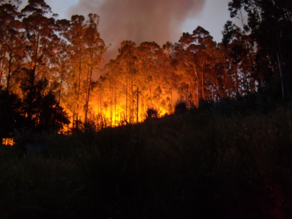 Eucalyptus forest fire, Madeira, Portugal, 3 July 2011
