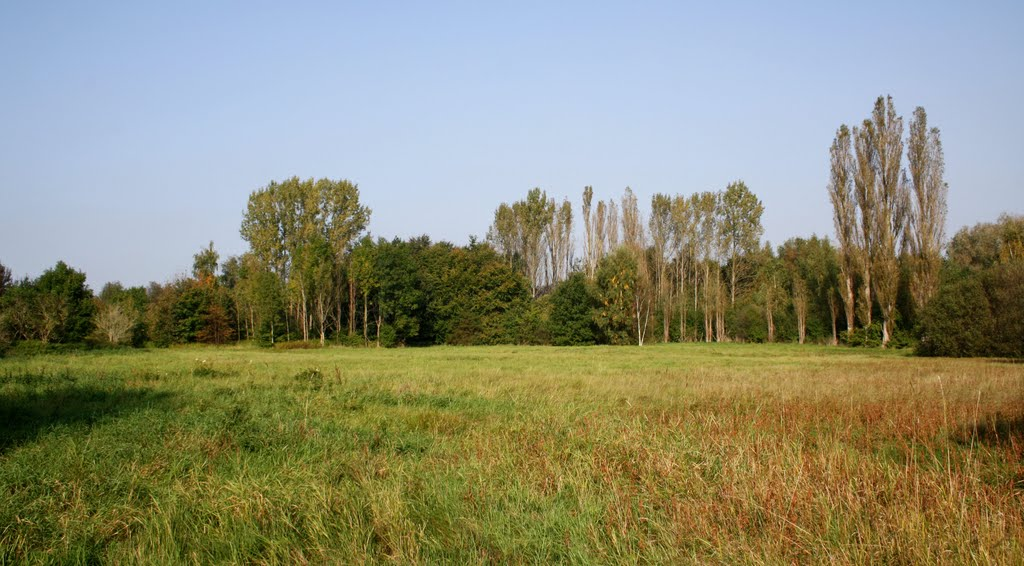 Meadow near Skovlunde
