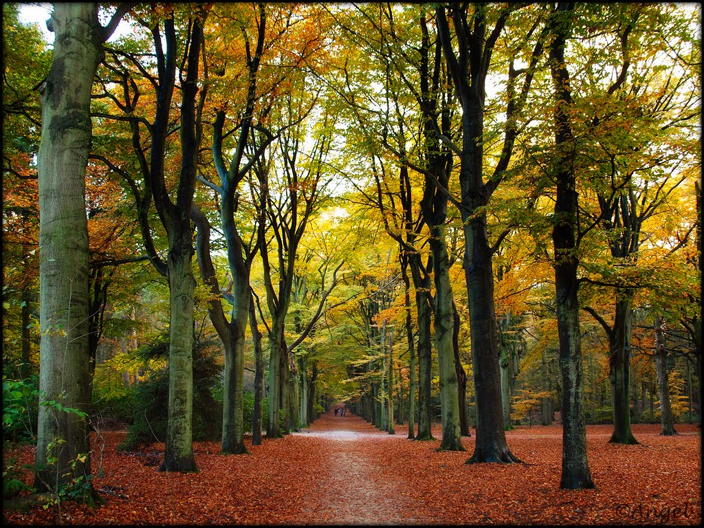 Autumn colored lane in the woods