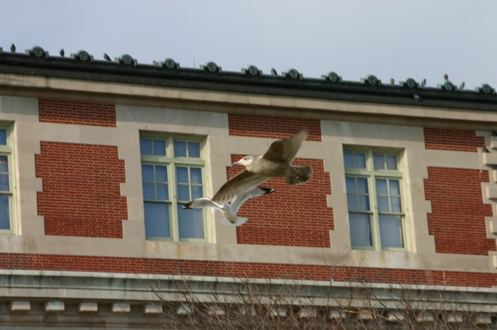 Sea Gull at Ellis Island, NY. (December 2003)