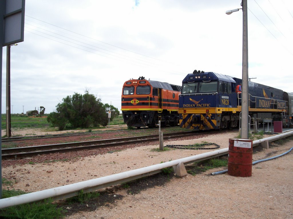 the Indian Pacific in Cook
