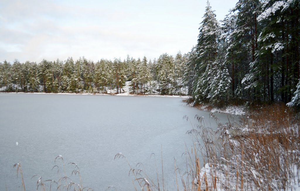 Southeastern shore of Iso Romlampi, after the first December snowfall (Nuuksio national park, Espoo, 20111206)