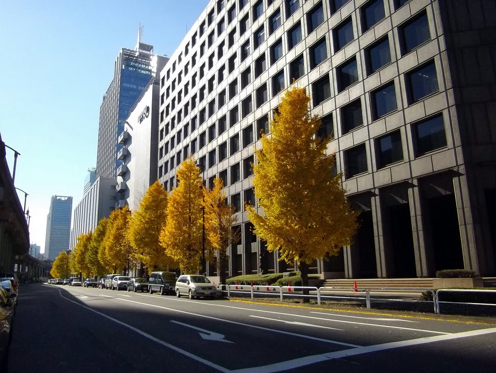 Ginkgo tree in Otemachi / 大手町