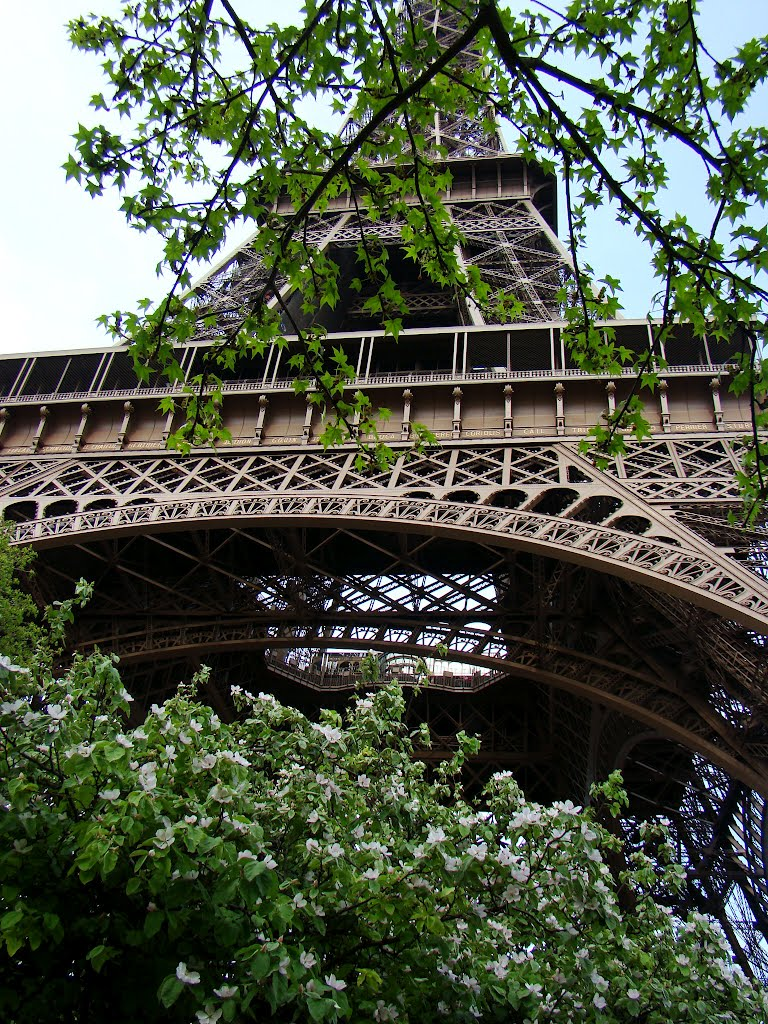 I like Paris ♥  in spring! The Eiffel Tower**By Cathy Cotte**